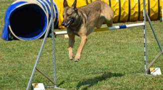 Coupe et Grand Prix de Belgique de dressage canin