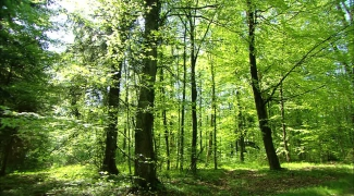 Vente de bois feuillus