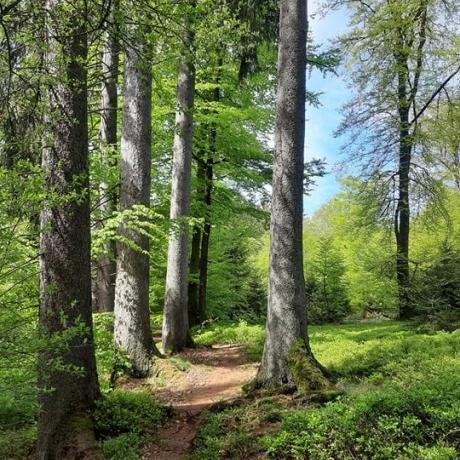 Je peux me balader partout en forêt. C'est vrai ça ?